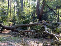 Downed trees nearby
